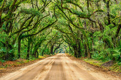 Tunnel of oaks, Botany Bay, South Carolina. Summer greens along the tunnel of oaks at South Carolina's Botany Bay Stock Photo