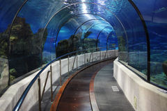 Tunnel in an oceanarium Royalty Free Stock Images