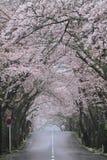 Tunnel Of Cherry Blossoms In Izu Highland, Shizuoka Rainy Stock Images