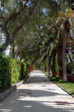 Tunnel of Palm Trees. Tropical Palm Trees Stock Photography