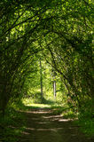 Tunnel path in the forest Stock Images