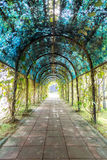 Tunnel path tree green shady Royalty Free Stock Images