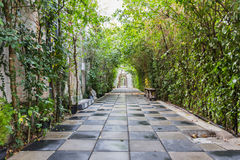 Tunnel pathway covered with green leaves Royalty Free Stock Image