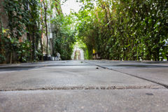 Tunnel pathway covered with green leaves Stock Photography