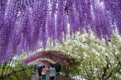 Tunnel piovoso di glicine di Kawachi Fotografia Stock Libera da Diritti