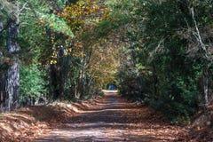Tunnel pittoresco dell'albero sopra la strada della campagna Fotografia Stock Libera da Diritti