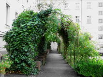 Tunnel from plants Stock Photo