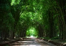 Tunnel road bamboo tree background Stock Images