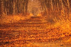 Tunnel road in the fall stock photos