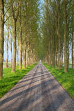 Tunnel road between tree rows Royalty Free Stock Photos