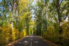 Tunnel road with trees in autum Stock Images