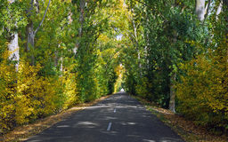 Tunnel Road with Trees in Autumn Royalty Free Stock Image