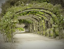 Tunnel rose d'old-fashioned romantique photo stock