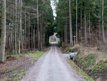 Tunnel som är tokig ut ur träd Arkivbild
