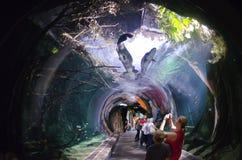 tunnel som göras av exponeringsglas i ett akvarium Fotografering för Bildbyråer