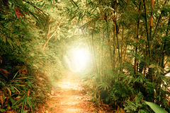 Tunnel with sun rays in fantasy tropical forest Stock Images