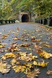 Tunnel sur le journal de hausse de gorge d'Oneonta Image stock