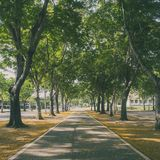 Tunnel tree row Royalty Free Stock Photography
