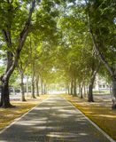 Tunnel tree row Royalty Free Stock Image
