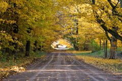 Tunnel of Trees. A road in autumn with a canopy of trees creating a tunnel Stock Photos