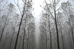 Tunnel of trees. Tunnel of autumn trees in the fog Royalty Free Stock Photos
