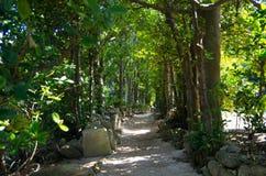 Tunnel of the trees. The tunnel of the trees in Okinawa, Japan.  It is called Fukugi Namiki Royalty Free Stock Photo