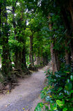 The tunnel of the trees. In Okinawa, Japan. It is called Fukugi Namiki Royalty Free Stock Photography