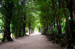 The tunnel of the trees Royalty Free Stock Photography