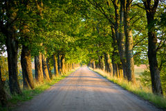 Tunnel of trees. Tunnel of green trees on sunlight Royalty Free Stock Photos