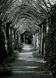 Tunnel of trees Stock Photo