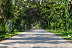 Tunnel trees with asphalt road Stock Image