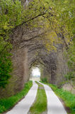 Tunnel of trees Royalty Free Stock Images