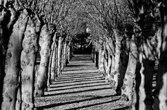 Tunnel of trees in black and white Royalty Free Stock Photos