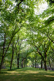 Tunnel of trees in Central Park. Royalty Free Stock Photography