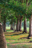 Tunnel of trees Stock Photography
