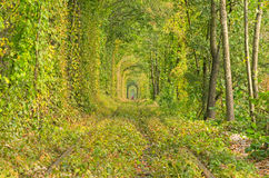 Tunnel of trees hides the old railway line. In the distance you can see the silhouette of a girl in red. Stock Photo