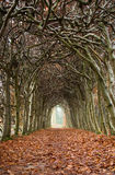 Tunnel of trees Stock Image