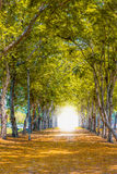 Tunnel of trees. Light at the end of trees tunnel in the park Stock Photo
