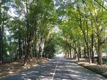 Tunnel of Trees. Trees make a tunnel over road Royalty Free Stock Image