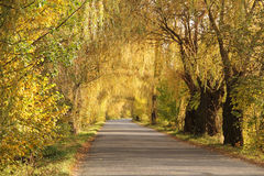 Tunnel through the trees. Old willows and some other trees with colorful leaves creating a tunnel above the road in autumn in the evening light, Poodri, Czech Royalty Free Stock Photo