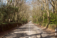 Tunnel of trees over a road. royalty free stock photography