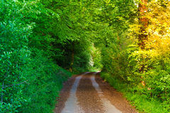 Tunnel from trees royalty free stock images