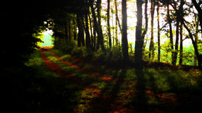 Tunnel through trees. Scenic view of tunnel receding through dark trees in wood or forest Stock Photo