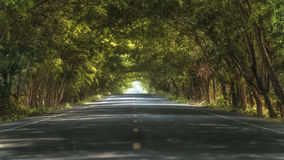 Tunnel of trees Royalty Free Stock Image