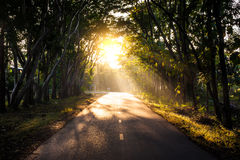 Tunnel of trees in thailand:solution Royalty Free Stock Photo