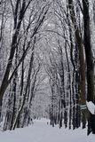 Tunnel of trees in the winter idyll. In the peace and quiet of the forest a small forest road. Image associated to meditation, calm and silence. A striking royalty free stock photo
