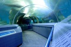 Aquarium tunnel. Tunnel underwater of an aquarium in thailand Royalty Free Stock Photos