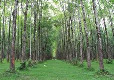 Tunnel van bomen die zich eindeloos uitrekken Stock Afbeelding