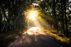 Tunnel van bomen in Thailand: oplossing Royalty-vrije Stock Foto