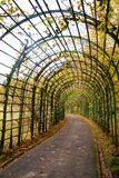 Tunnel van installaties stock foto's